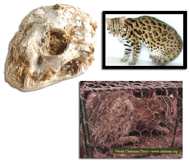 Fake_leopard_cat_skull copy