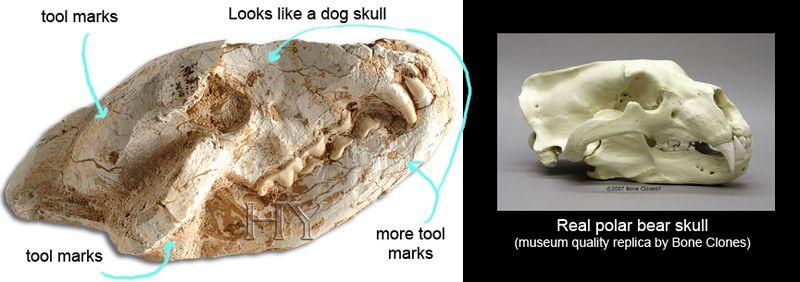 Fake_polar_bear_skull copy