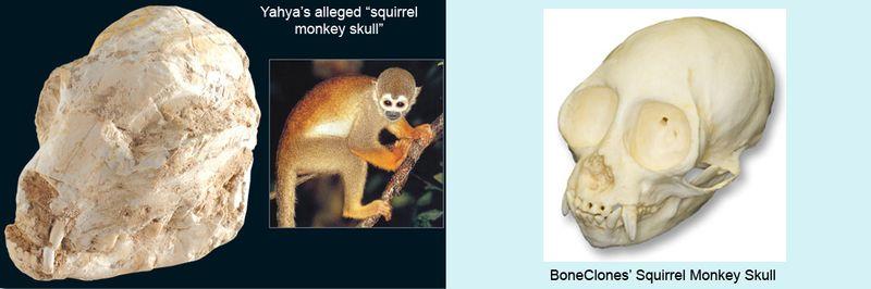 Squirrelmonkey