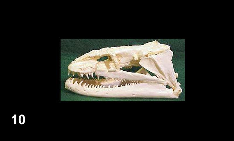 Bones10