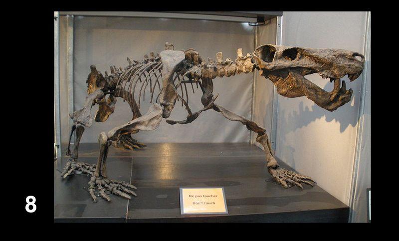 Bones8