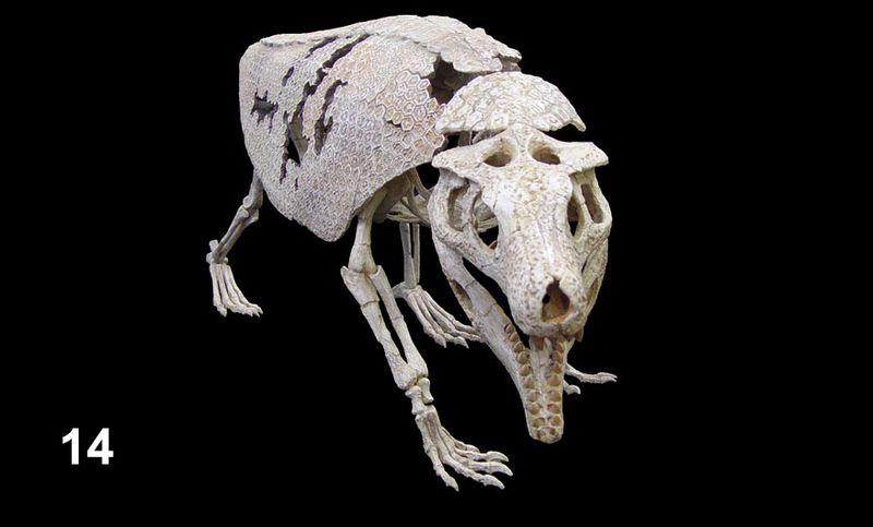 Bones14
